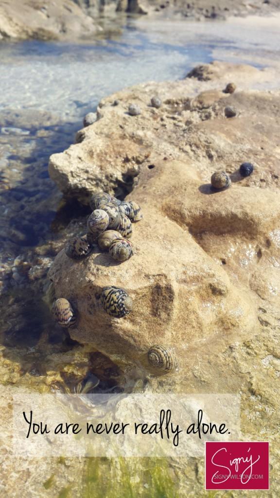 4-Snails-Alone